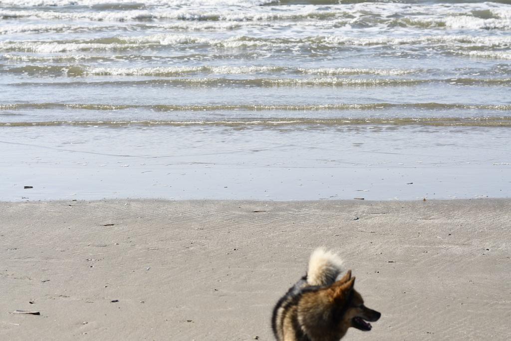 Honden op strand, Velsen City Blog